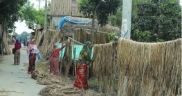 চাঁপাইনবাবগঞ্জে পাটের সুদিন ফিরেছে