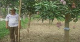 প্রথম হাইব্রিড রঙিন আমের জাত সফলতার মুখ দেখছে