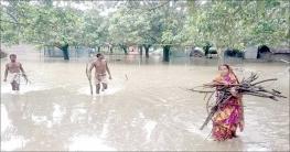 শিবগঞ্জে পানিবন্দি ৩০০ পরিবার, তলিয়ে গেছে ফসলি জমি
