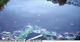 শিবগঞ্জে আট লাখ টাকার মাছ নিধন