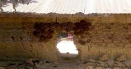 নাচোলে সিঁধেল চুরির ঘটনায় খোয়া গেছে ৮টি গরু