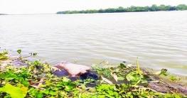 ভোলাহাটে মহানন্দা নদী থেকে অজ্ঞাত শিশুর লাশ উদ্ধার